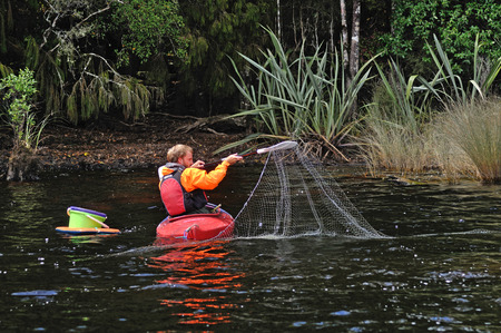 GREYMOUTH, NEW ZEALAND, FEBRUARY 12, 2014: Unidentified man from the New Zealand Department of Conservation checks a set net for evidence of pest fish such as Rudd and Carp in Lake Haupiri, West Coast, South Island, New Zealand