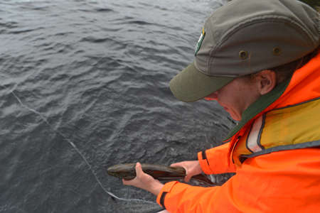 GREYMOUTH, NEW ZEALAND, FEBRUARY 12, 2014: A woman from the New Zealand Department of Conservation releases a trout caught during a check for evidence of pest fish such as Rudd and Carp in Lake Haupiri, West Coast, South Island, New Zealand