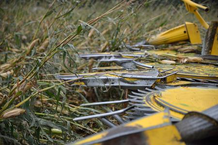 cosechadora: Detalle de los cortadores de la cosechadora como agricultores cosechan un cultivo de ma�z para ensilado en una granja lechera en Westland, Nueva Zelanda Foto de archivo