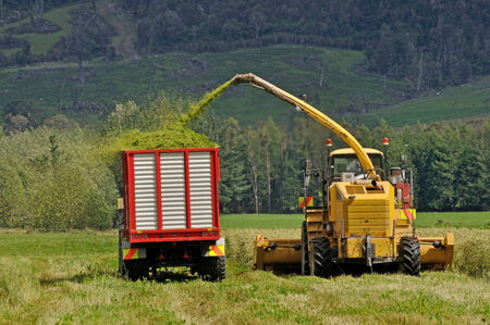 Farmers harvest a crop of triticale for silage on a dairy farm in Westland, New Zealand