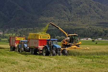 GREYMOUTH, NEW ZEALAND, JANUARY 14, 2014: Farmers harvest a crop of triticale for silage on a West Coast dairy farm, South Island, New Zealand