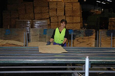 ply: GREYMOUTH, NEW ZEALAND, MAY 22, 2015 : An unidentified worker grades freshly dried  sheets of veneer for pressing into plywood on May 22, 2015, near Greymouth, New Zealand Editorial