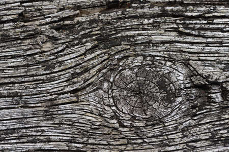 knothole: background of weathered woodgrain on an old board
