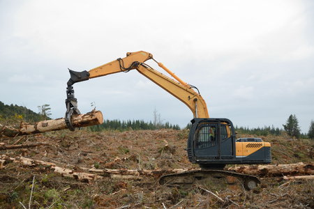 labouring: A digger with a claw moves a Pinus radiata log a milling site in exotic forest on the West Coast of New Zealand