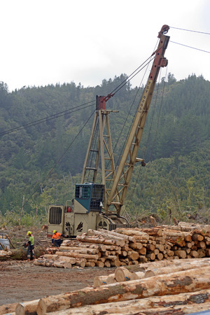 labouring: GREYMOUTH, NEW ZEALAND, NOVEMBER 18, 2015: A log hauler drags Pinus radiata onto the landing at a milling site in exotic forest on the West Coast, 18.11.2015 Editorial