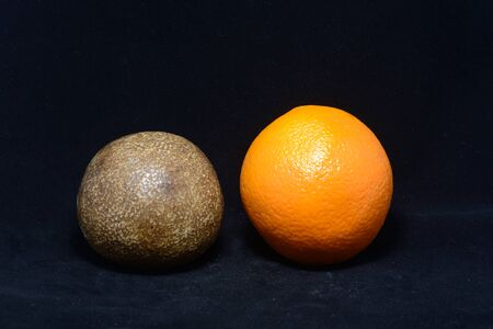 weighs: A remarkable fossil of an orange from the citrus growing area of Gayndah, Queensland, Australia, which cannot be more than 160 years old. The real orange weighs 219 grams and the fossil 474 grams. From a private collection. Stock Photo