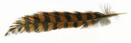 A feather of  New Zealand woodhen or weka Reklamní fotografie