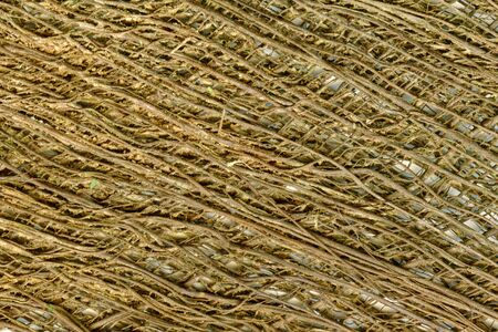 Detail of fibre from a  windmill palm tree creates a natural textured