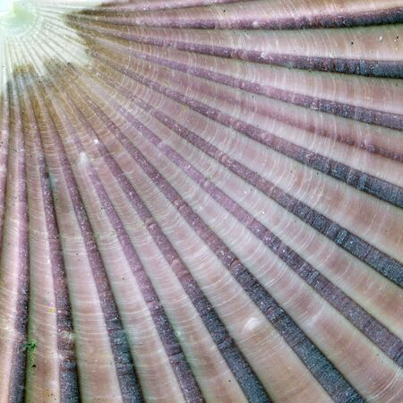 Detail of the surface of a seashell