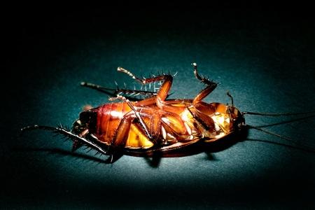 Cockroach extermination concept photo