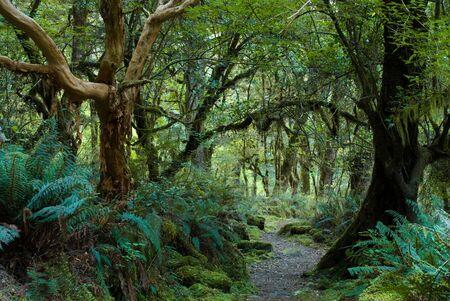 primeval forest on kepler track, fiordland, new zealand Stock Photo