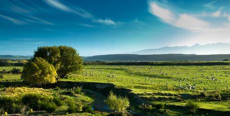 Panoramic view of rural scenery, fiordland, new zealand. photo