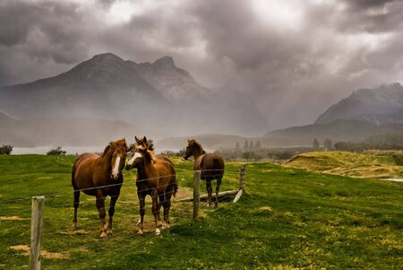 Three horses awaiting an approaching storm near glenorchy, new zealand.