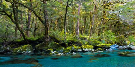 Forest and deep blue river, on routeburn track, mt. aspring national park, new zealand