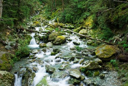 dosh: Small river in forest on routeburn track, south island, new zealand