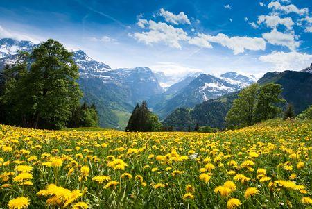 Vista panorámica de Braunwald (Suiza) con el campo de la floración en la primavera de dientes de león.