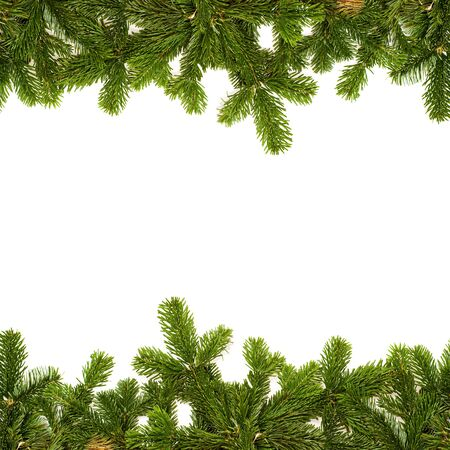 fir twig: green fir twig frame on white background Stock Photo