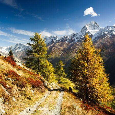 Bietschorn piku terenach górskich jesieniÄ…. Widok z Laucheralp, Loetschental, Wallis, Szwajcaria Zdjęcie Seryjne