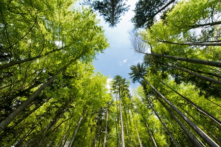 Wide angle view of a colorful spring forest Stock Photo