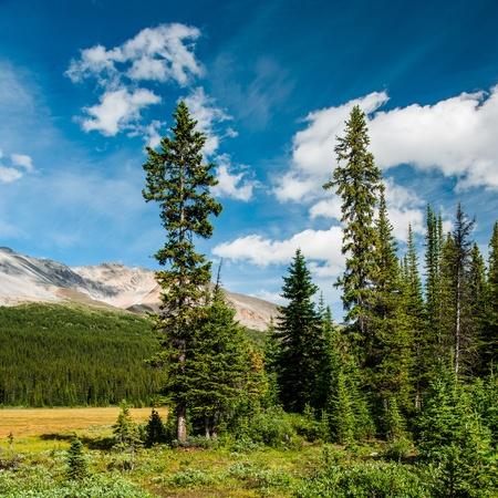 Bosque claro en el Parque Nacional Banff, Canadá