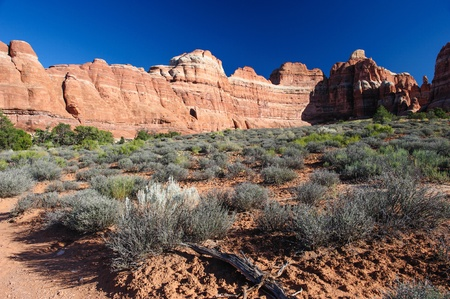 canyonland: Needles rock formation in Needles District, Canyonlands National Park, Utah, USA
