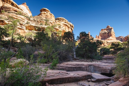 canyonland: Needles rock formation and hiking trail in Needles District, Canyonlands National Park, Utah, USA