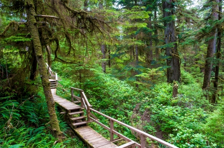 vancouver island: Forest trail on Vancouver Island, Canada