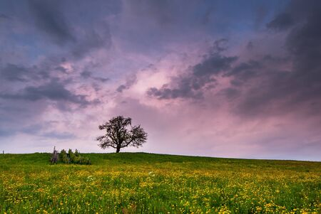 snow field: single tree on blossoming meadow at sunset with dark clouds