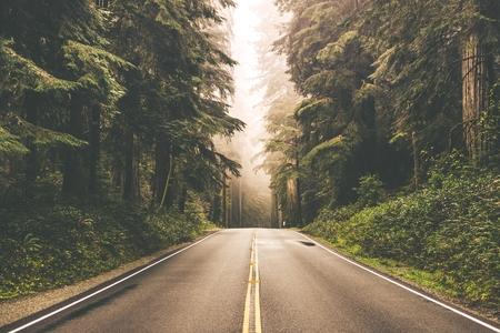 carretera: Foggy carretera de la secoya Derecho en el norte de California, Estados Unidos Foto de archivo