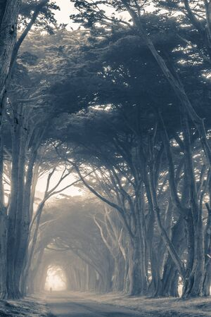 bluish: Scenic Foggy Trees Alley in Bluish Color Grading. Vertical Photo.