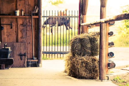 stud: Stable Hay Cubes. Stud Farm Horse Feeding Place.