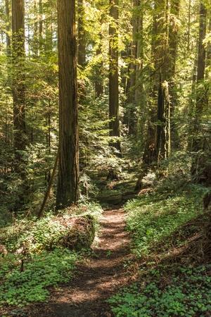 Trailhead bosque. Pista de senderismo en el Bosque. Foto vertical.
