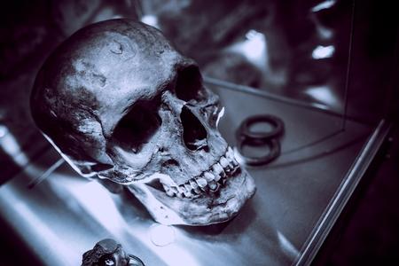 murdering: Ancient Skull on Display. Bluish Color Grading.