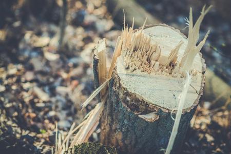 Cut tree stumps