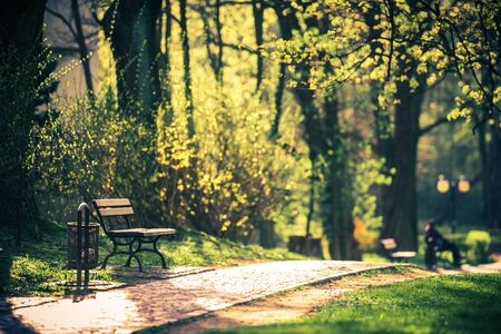 Spring is comming. Bench in the park.