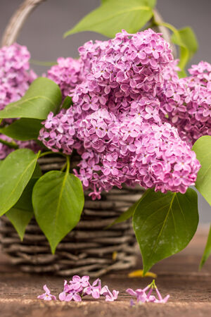 basket with a branch of lilac flower on a wooden surface photo
