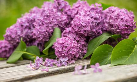 beautiful purple lilac flower on a bench Zdjęcie Seryjne