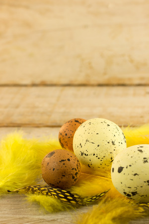 spoted: colored spoted easter egg with yellow feathers Stock Photo