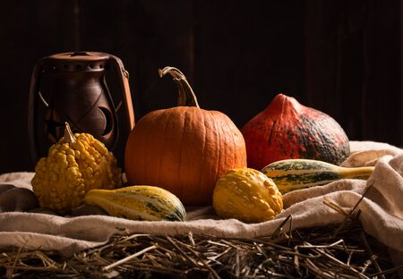 peacefull: Peaceful Thanksgiving ,Fall Still Life with Mini Pumpkins