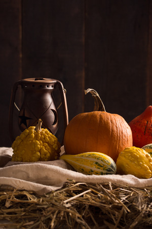 peacefull: Peaceful Thanksgiving ,Fall Still Life with Mini Pumpkins,vertical composition Stock Photo