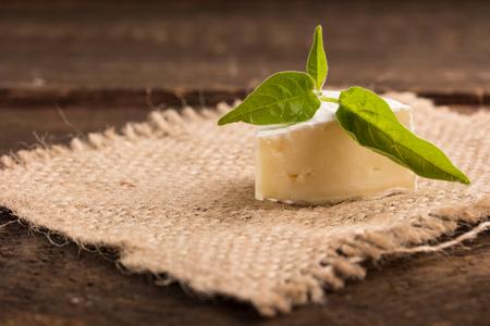 penicillium: camembert cheese on a canvas
