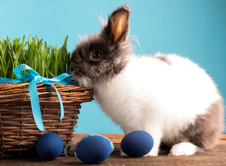 easter bunny with blue easter eggs