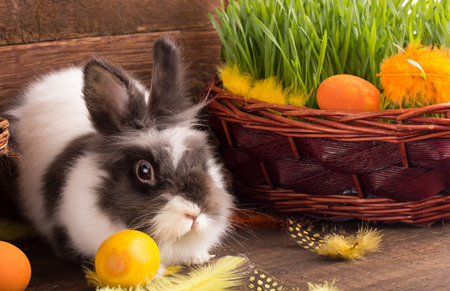 cute bunny: cute easter bunny with easter eggs Stock Photo