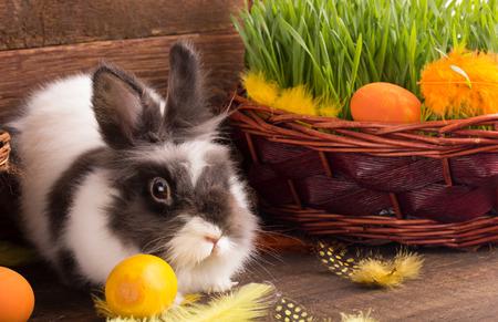 osterhase: niedlichen Osterhasen mit Ostereiern Lizenzfreie Bilder