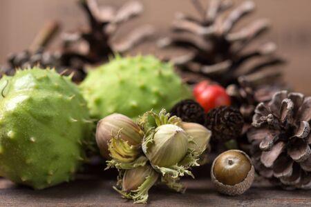 autumn background with pinecone,acorn,chestnut etc Standard-Bild
