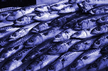 Mackerel fish stall