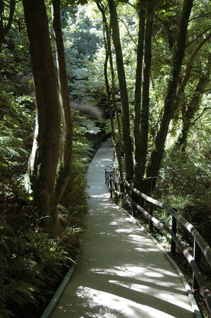 A pathway leading through a dense forest