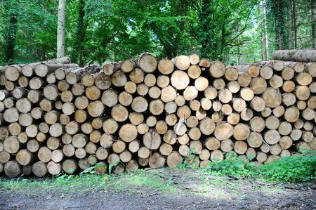 a large pile of logs in a forest