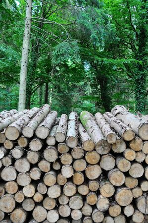 a large pile of logs stacked in a forest Stock Photo