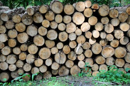 a big pile of freshly cut logs piled up in a forest Stock Photo